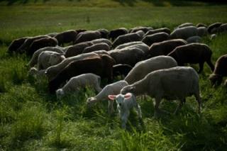 Get_wool-24 (1)